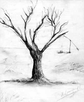 Tree - graphite pencil drawing Tree Pencil Drawing